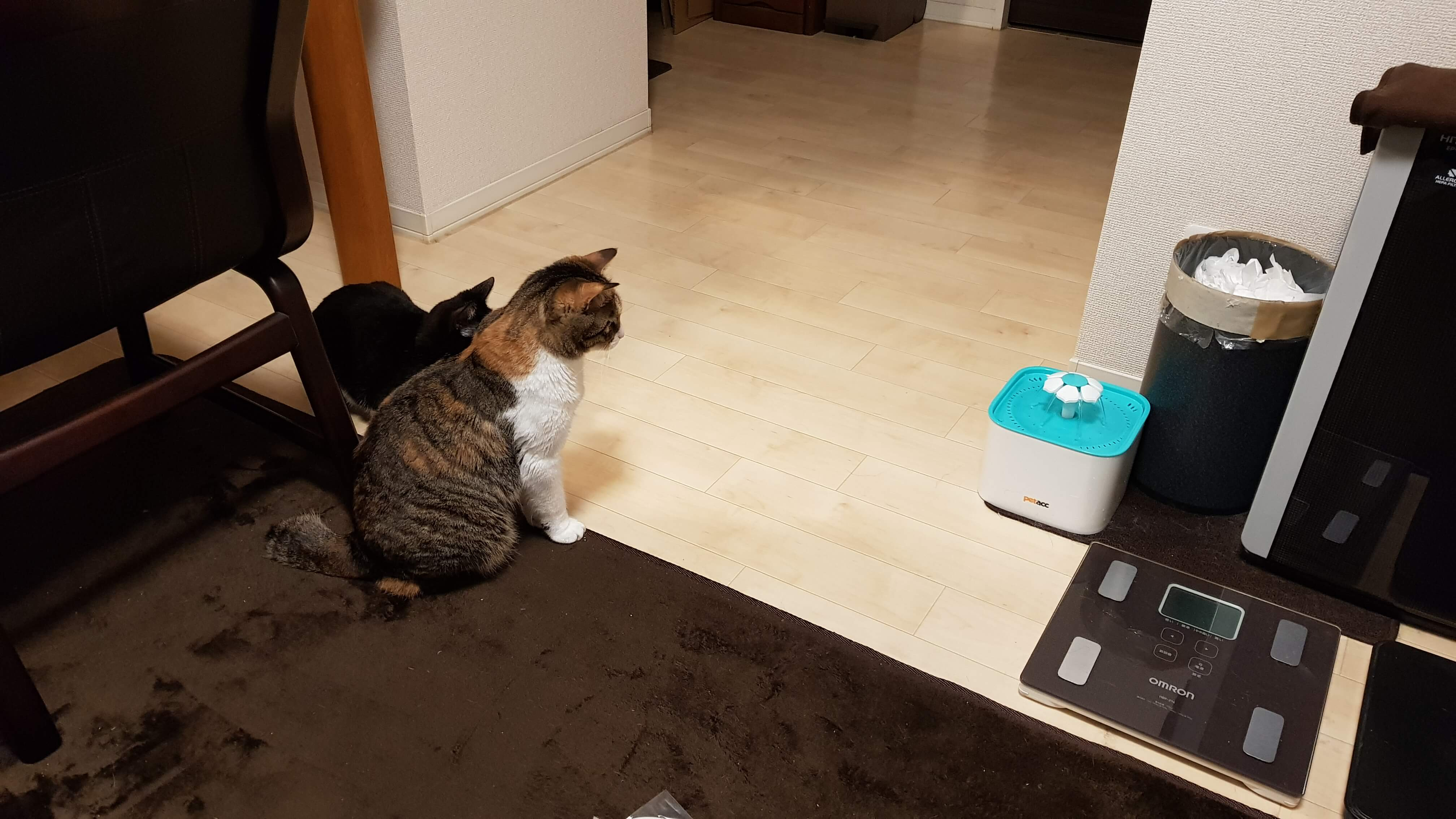 cat-automatic-water-dispenser-review-29